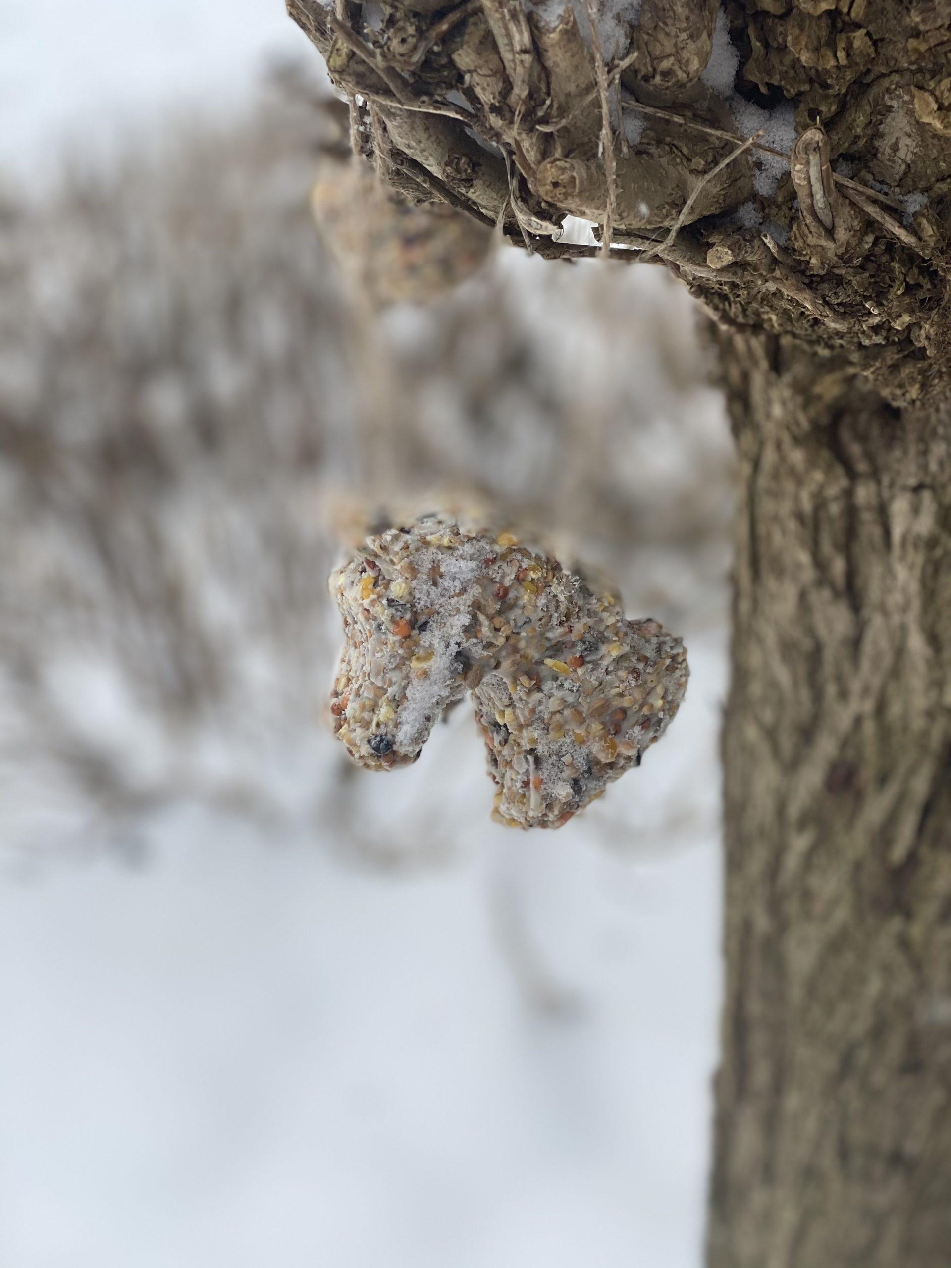 Zelf vetbollen maken | Leuke activiteit met kinderen in de winter